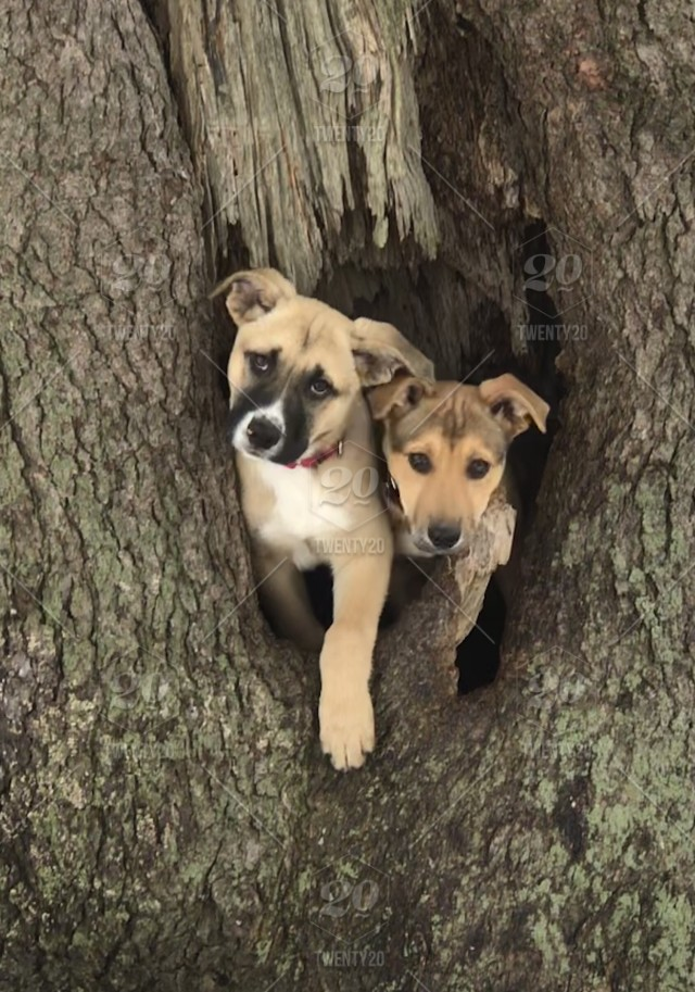 Tree Dog Puppy Cute Two Puppies Dogs Rescue Dogs Cute Puppies Adorable Puppy Stock Photo 08673615 F747 4092 Bb29 13ca7ce39fca