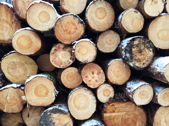 A full frame background image of stacks of logs or timber that is to