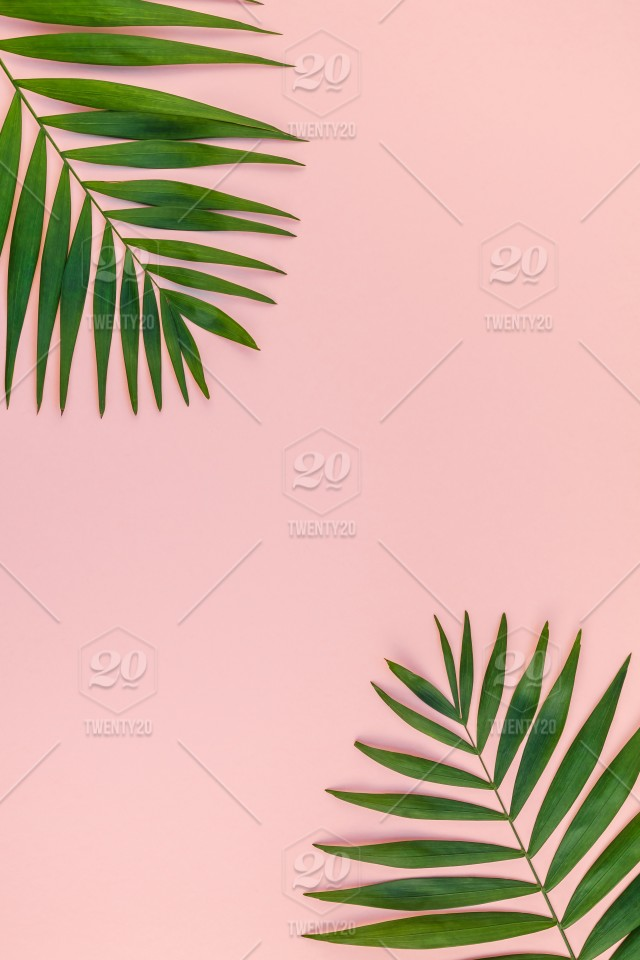 Creative Flat Lay Top View Of Green Tropical Palm Leaves Millennial Pink Paper Background With Pineapples Copy Space Minimal Tropical Palm Leaf Plants Summer Concept Template For Your Text Or Design Stock Tropical leaves free background free photo. creative flat lay top view of green