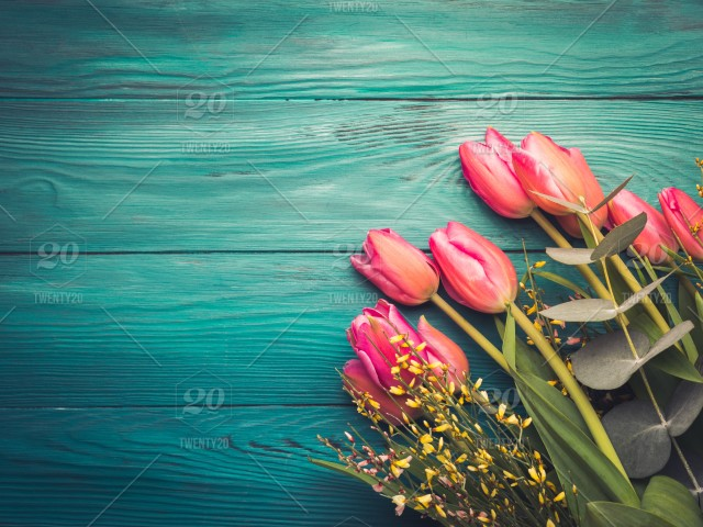 Beautiful Pink Tulips On Dark Green Emerald Background