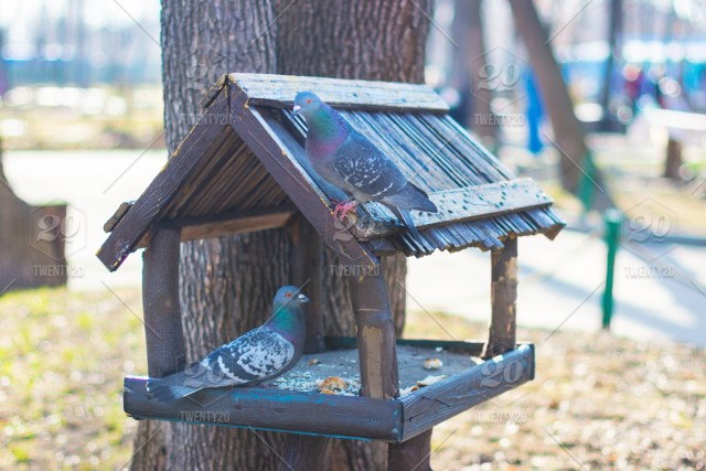 Pigeonsbird Nature Feeder Food Sparrow Garden Wooden