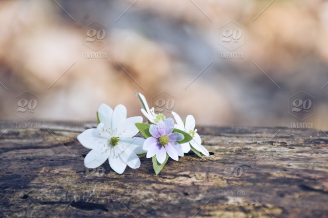 Nature Flowers In The Woods