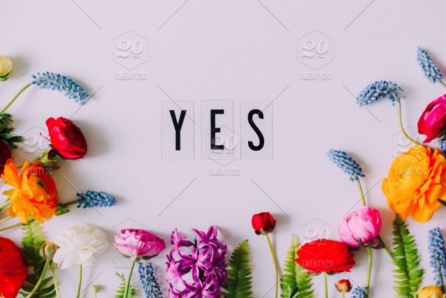 Word yes ! Bouquet of beautiful colorful ranunculus and spring flowers on white background with copy space for a text stock photo dc8124b0-8c86-403b-bbef- ...