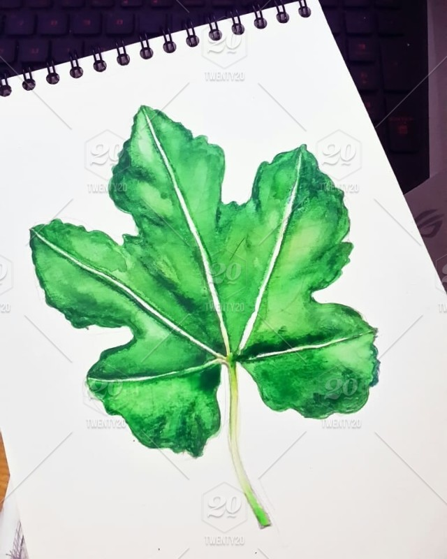 On Progress Drawing Maple Leaf Pencil Colors Watercolor Stock Photo 5208dec8 0c6b 4d13 8521 D4be5be83be0