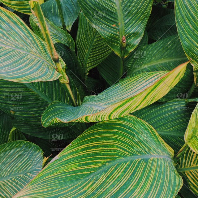 Life Color Stock Photo Ddc9b5e4 44ef 44b5 B94d D6de41e9dc4f There are 745 real leaf tropical for sale on etsy, and they cost $23.80 on average. twenty20