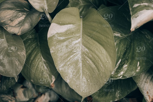 Abstract Nature Green Leaf Background And Beautiful Wallpaper Dark