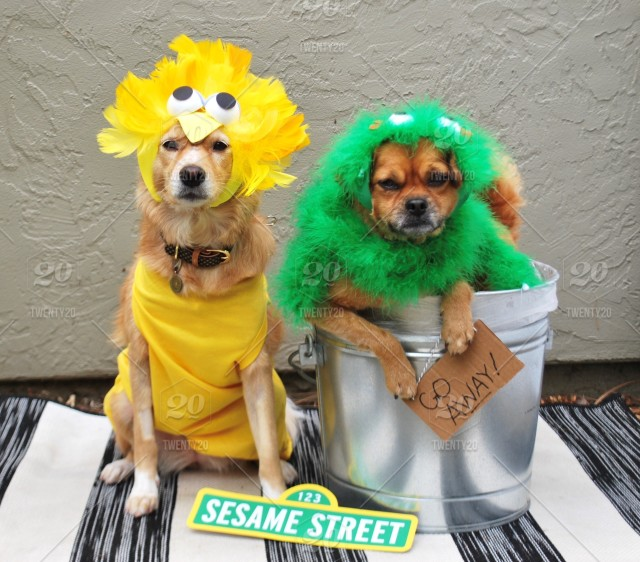 Dogs In Sesame Street Halloween Costume Stock Photo