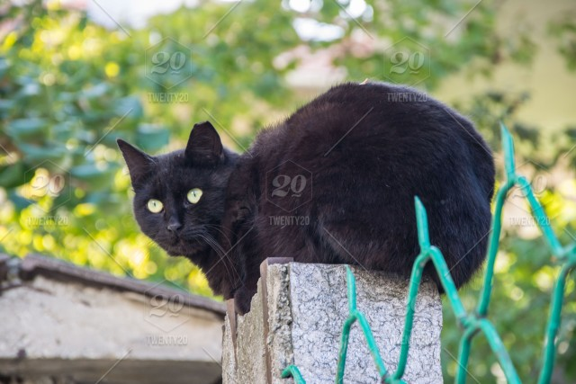 Beautiful Black Cat Sitting On A Fence Of A House Watching Outdoors Outdoor Mammal Beautiful Black Cat Black Cat Sit Watching Street Animal Animal Theme Background Season Seasonal Bad Luck Beauty