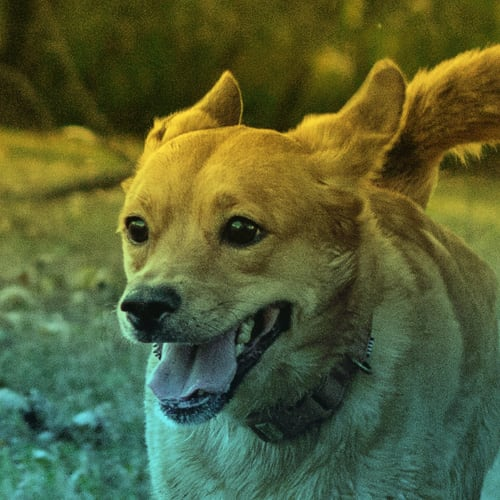 Maggie the Dog Headshot