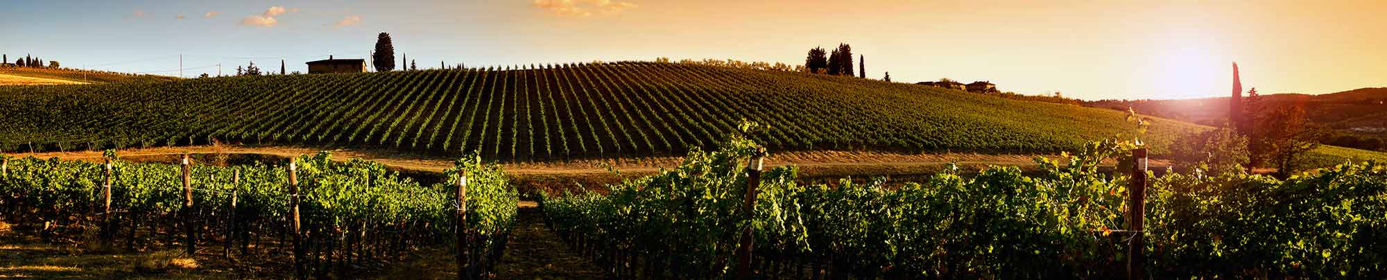 Italy wine guide