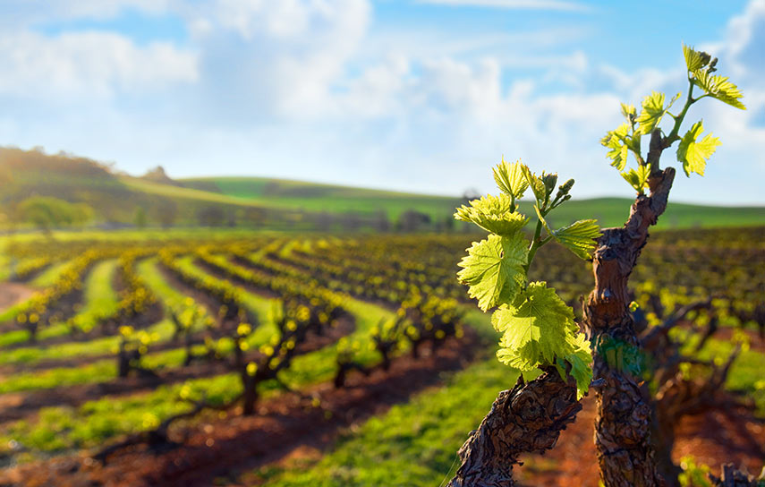 The Barossa Valley with its full-on and often fabulous wines is probably one of the better know regions, but there is so much more to this country and this region!