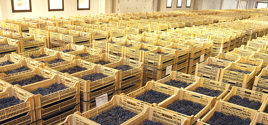 A modern-style drying room for making the appassimento grapes