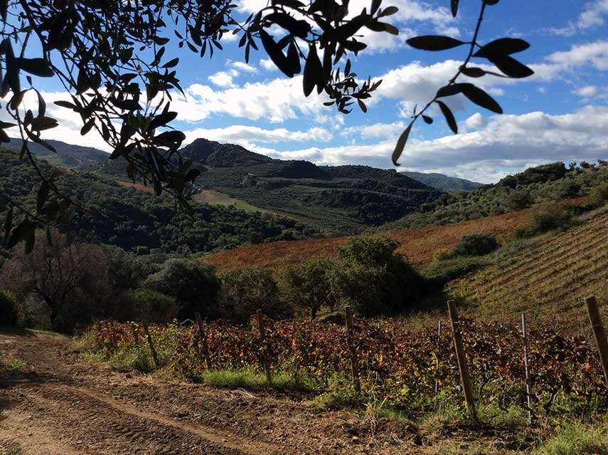 Santa Venere's beautiful organically cultivated vineyards are a long drive from anywhere – but are emphatically worth the journey