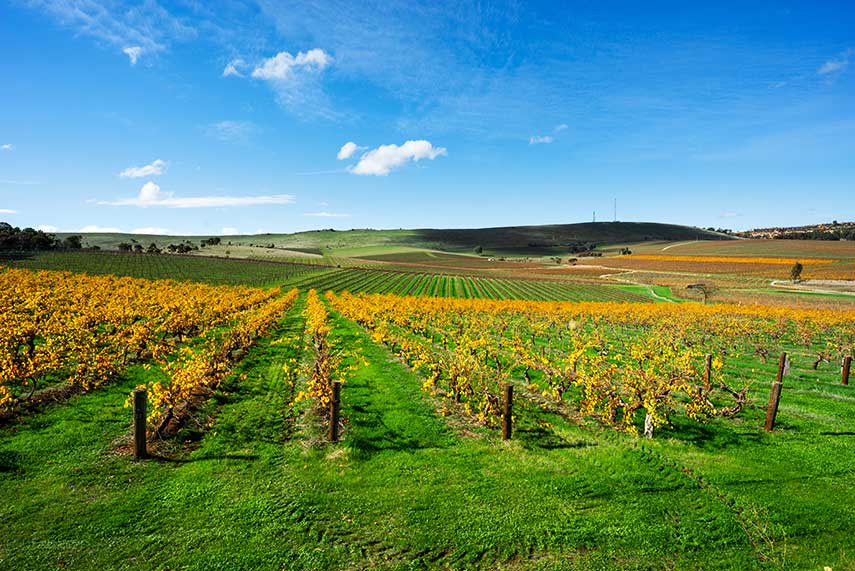 The Clare Valley, one of Australia's oldest wine regions and a great source of some of the world's finest dry rieslings