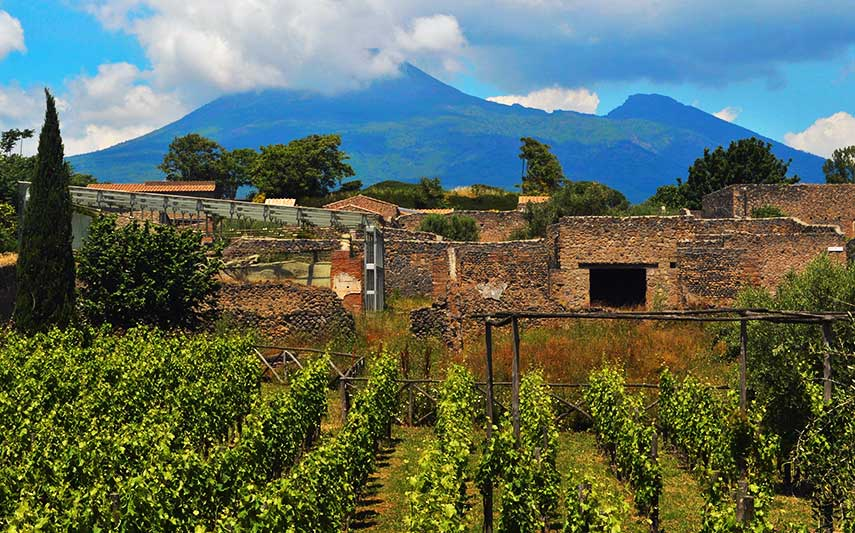 A vineyard in the shadow of Mount Vesuvius in southern Italy's Campania region