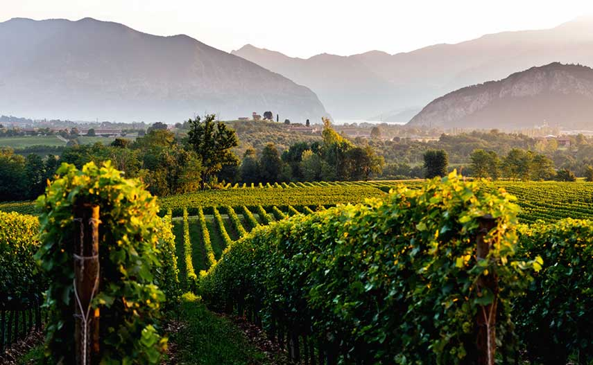 Sunrise in Franciacorta, in the Brescia province of Italy's Lombardy region