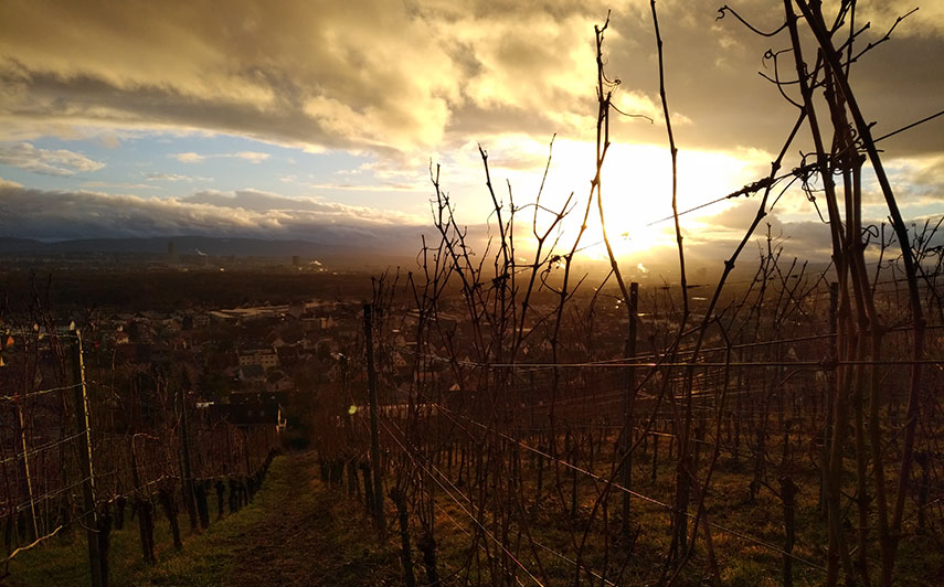 Sunset as seen from the Weiler Schlipf vineyard in Baden