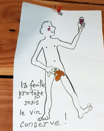 'The leaf protects, but the wine preserves'