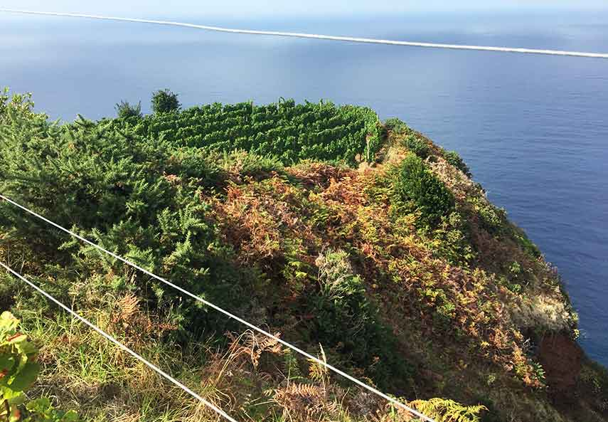 Every inch of the island is used to grow something, in this case Boal