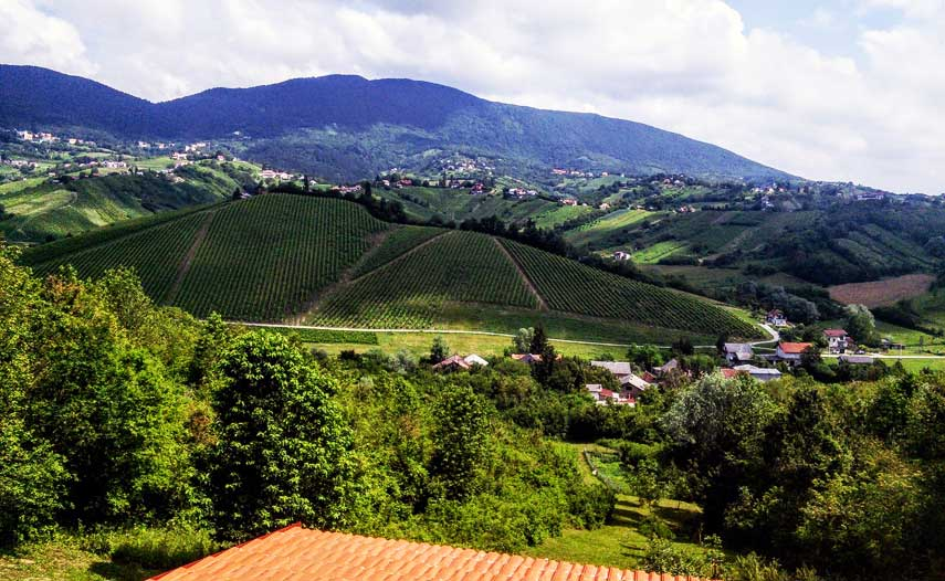 Andrew Jefford tastes wine in the hidden, flower-clustered  highlands north of Zagreb, Croatia