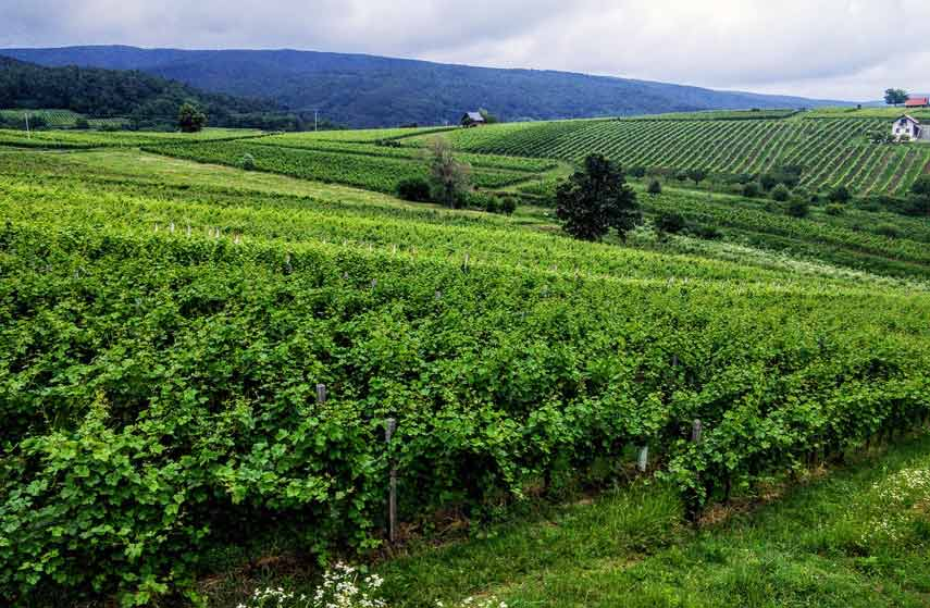 The Wine Region of Slavonia links Zagreb with the Danube