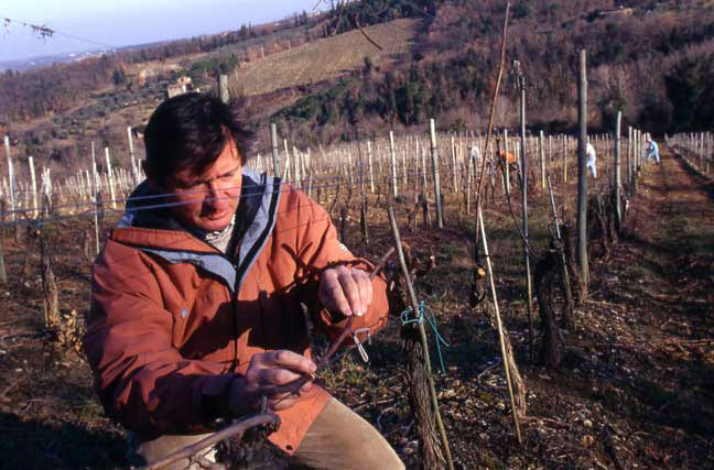 Paolo de Marchi, thirty years ago, among the vines he takes such care of.