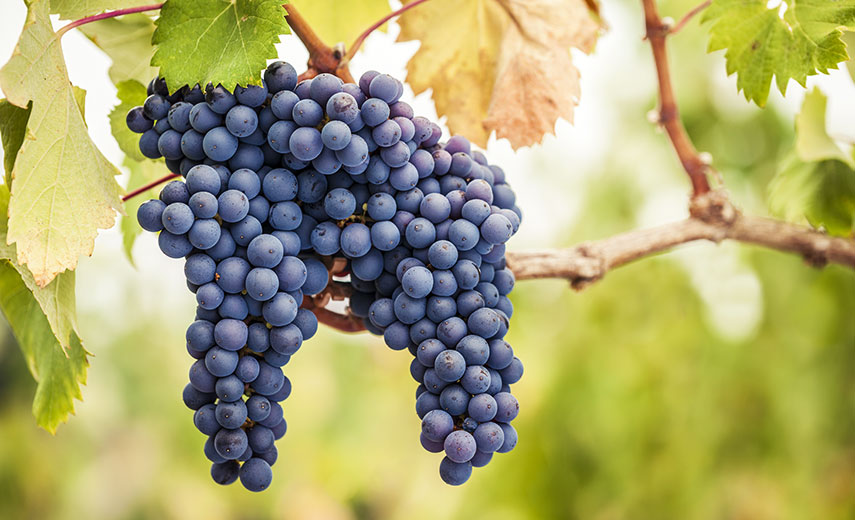 Pinot noir is often seen as the classic autumnal grape, but Martin thinks we should broaden our horizons