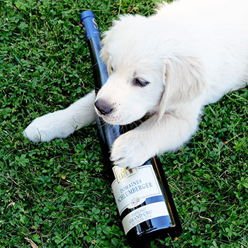 Essential training for the new Schlumberger pooch, Pocket