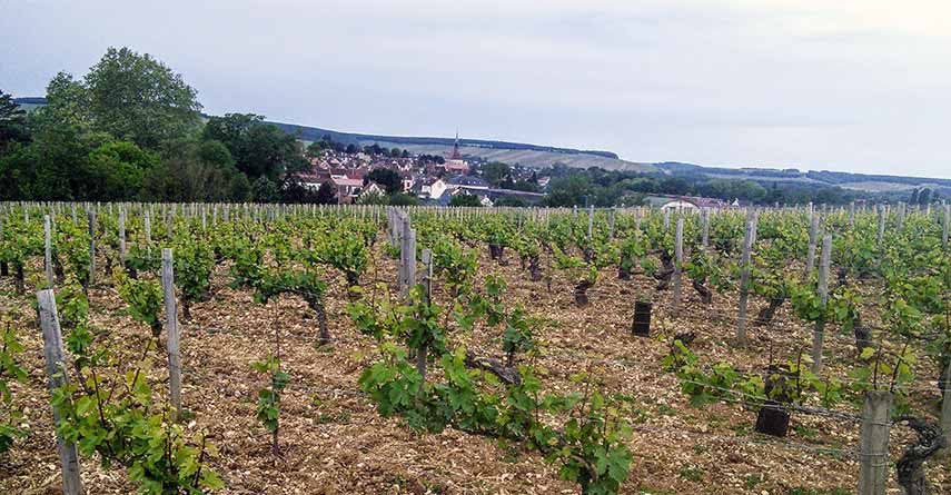 Looking down the slope to the village of Chablis below