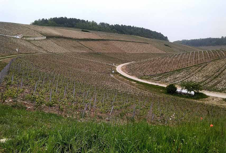 Magical slopes – grands crus Preuses, Vaudésir and Grenouilles (l-r) in Chablis