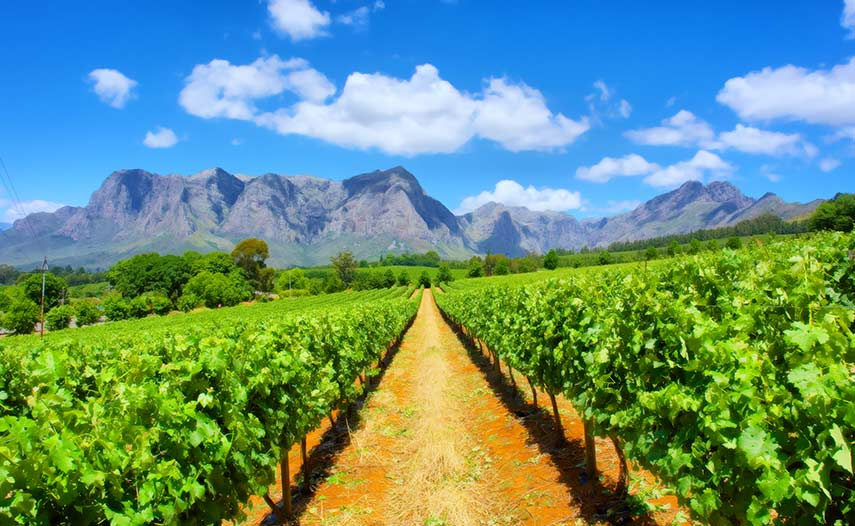 'Brilliant winemakers we love working with' mean that 2020 really is the year to discover South Africa's remarkable bargains