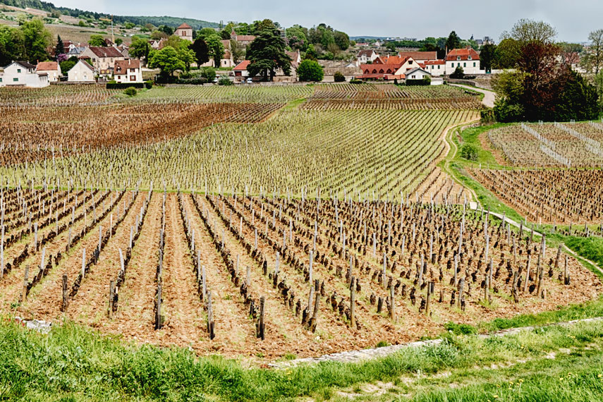 Vineyards around the pretty village of Gevrey-Chambertin – more Mondrian in style!