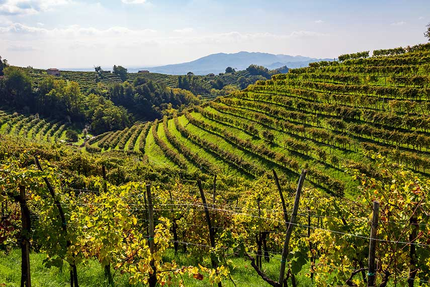 Top-quality Prosecco vineyards in the Valdobbiadene region