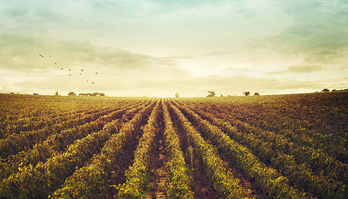 Vineyards For Sale In France For Cheap