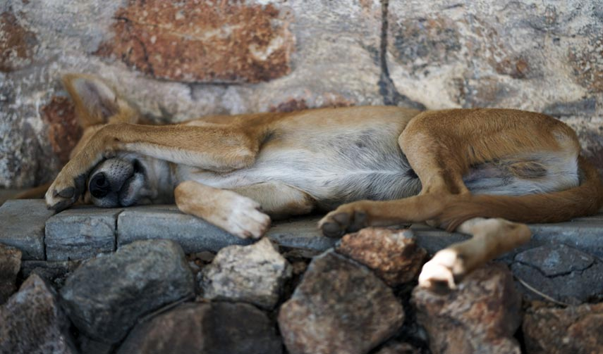 Dog Days – on the 28th June 2019 the mercury hit 45.9°C in the village of Gallargues-le-Montueux
