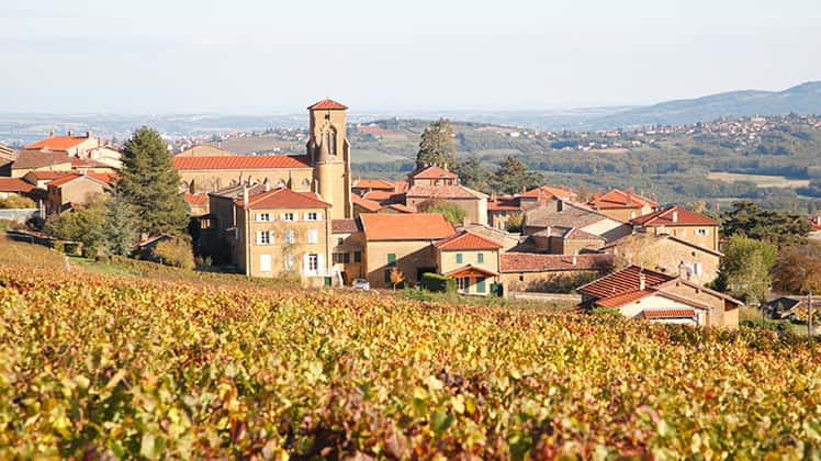 Beaujolais wine guide