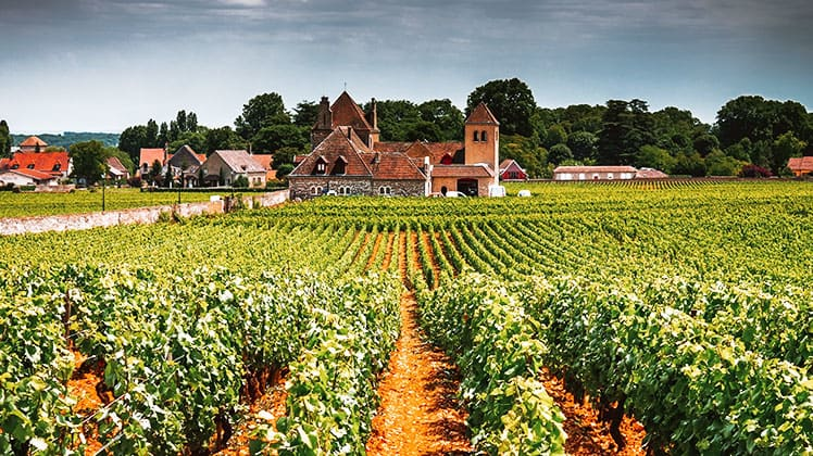 Burgundy wine guide