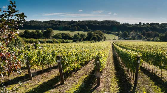 How to Buy English Wine