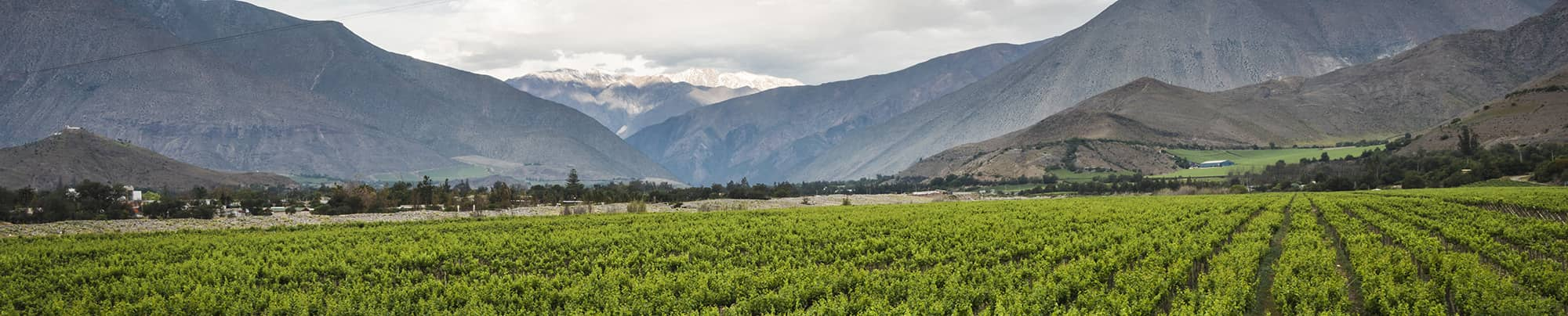 Chile wine guide