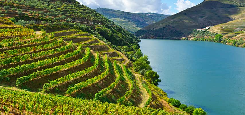 Vineyards in the valley of the River Douro