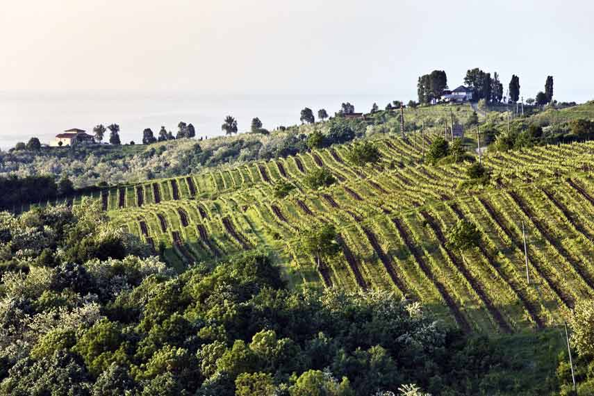 Vineyards at Prince Stirbey