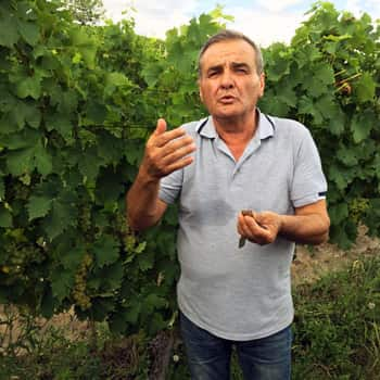 Dumitru Nedelut tended the Stirbey vines keeping them in good condition during the communist period and remains the domaine's agronomist to this day