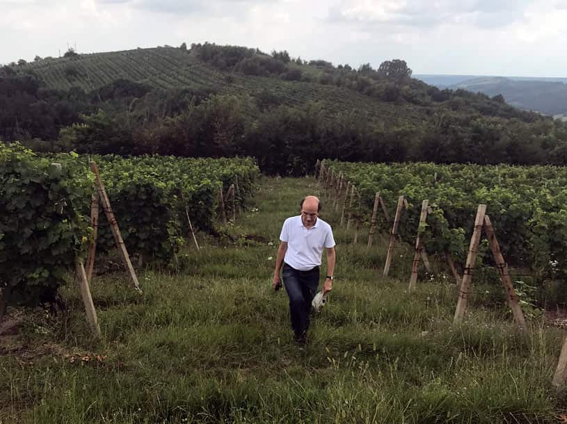 Jakob walking through the vineyards between rain showers