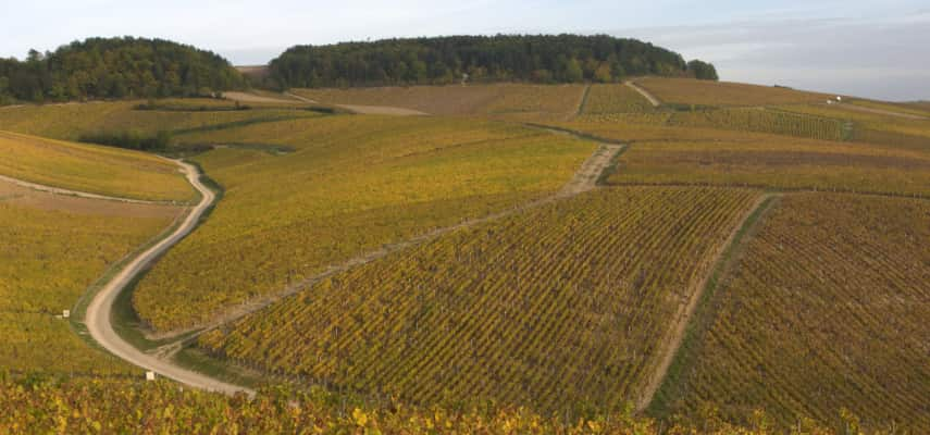Grand Crus of Chablis Vaudesir