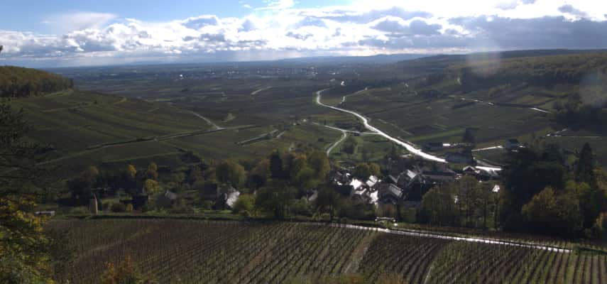 Vineyard views over Burgundy
