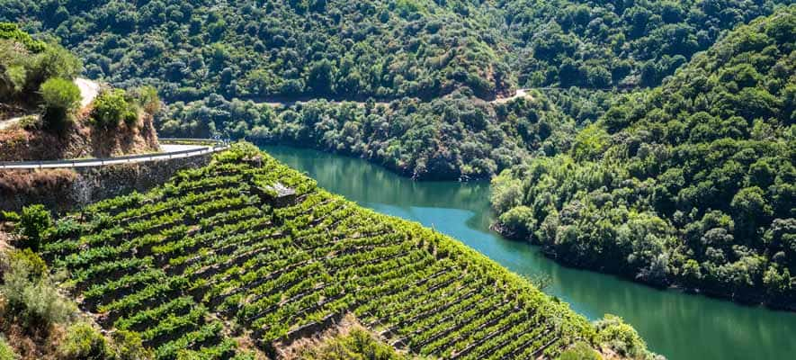 Douro Vineyard