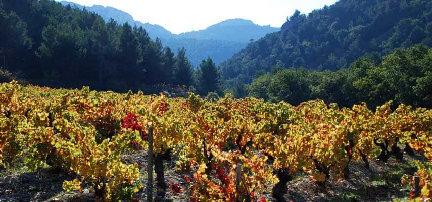 Generous red wines and a little rosé are made in the vineyards of Gigondas