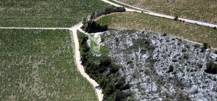 A bird's-eye view of vines in Châteauneuf-du-Pape