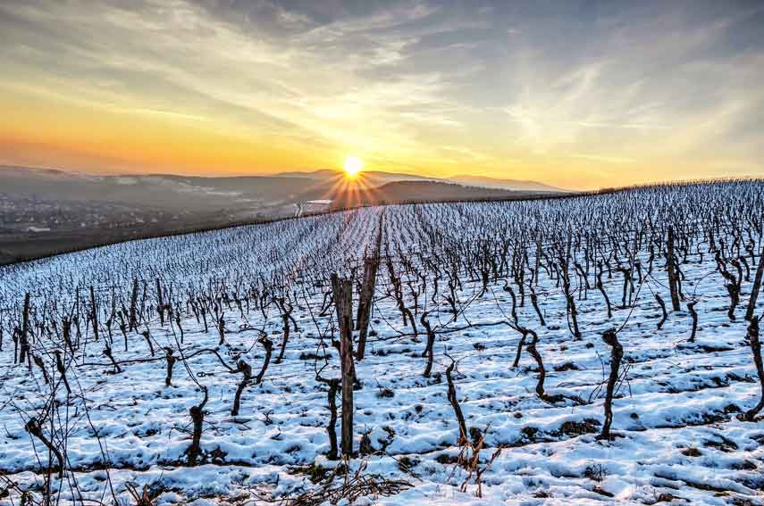 Alsace is one of France's most northerly wine regions, winemakers here aim for ethereal beauty rather than sheer power in their wines