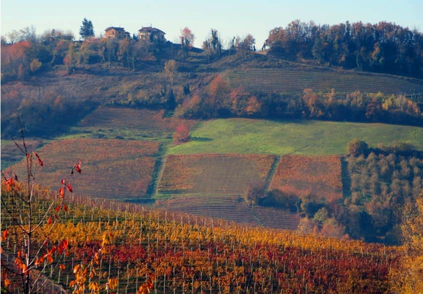 Piedmont in glorious late autumn colours: dolcetto and barbera vines turn red, while nebbiolo goes yellow